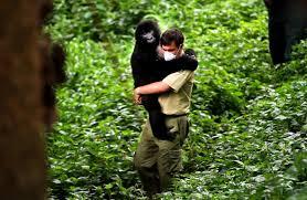 abbracciato a un gorilla