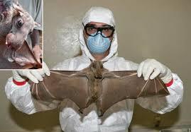 medico con pipistrello