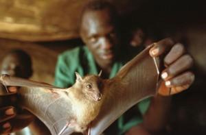 Guinea-Bats-Ebola