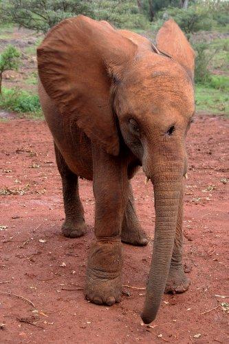 Simotua, 18 mesi dopo il suo salvataggio (foto © Sandro Pintus)