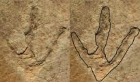 Orme di dinosauro ritrovate nel Lesotho