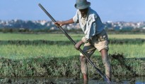 Contadino in Madagascar
