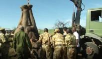 Uno degli elefanti viene caricato per il trasporto