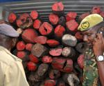 Uno dei 34 container contenenti gli alberi di palissandro
