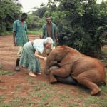 Daphne Sheldrick con Ajok, elefantino orfano nel 1991. ©The David Sheldrick Wildlife Trust