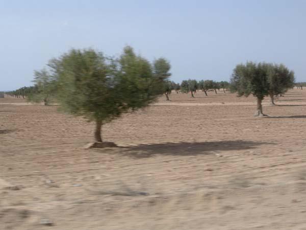 Uliveto in Tunisia