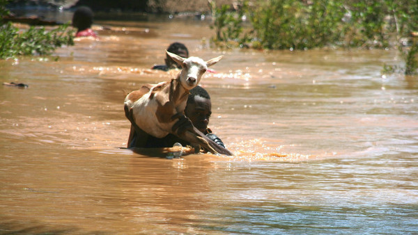 Malindi: alcuni allevatori tentano di portare in salvo il bestiame