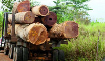 Traffico illegale di legname a Casamance, Senegal